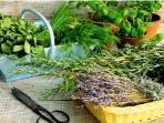 Les nombreuses plantes aromatiques.
