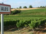 Alos surrounded by vineyards