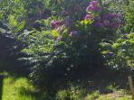 Jardin fleuri, aux belles couleurs d'été