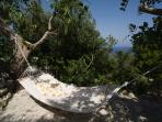 Relax in the hammock under ancient trees
