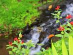 Stream flowing out of the koi pond with flowers waving in the breeze.