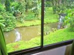 View outside from green bedroom to stream flowing through the back yard.