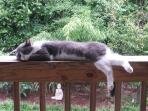 Zinnie, the resident outdoor cat, finds the private deck overlooking the Zen Garden to be  relaxing!
