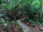 A visit to the gorgeous rainforest is like viewing the plants in Jurassic Park