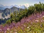 The meadows on Morclan  above Chatel in Summer.