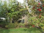 Peaceful garden where you can relax with mature apple and plum trees with fruit for you to enjoy.