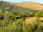 a backdrop of hills and olive groves