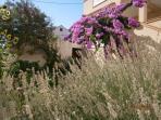 greenery (house and surroundings)