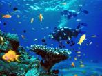 Adventure Scuba Diving Bali - start from 70 USD per 2 dives