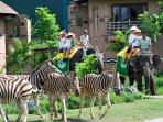 Elefant riding - Bali Safari and Marine Park trip - start from 40 USD