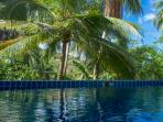 Swimming pool with Coconut garden view