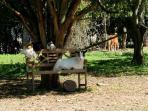 Banc dans le parc des animaux quand il est libre !