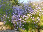 les massifs fleuris du jardin de La Tour de Guignes