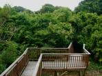 This is the walk from the lower playroom stairs through the front forest to the beach