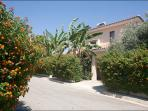The villa is situated in a tranquil area,private road among an oasis of palm,olive,banana trees,etc.