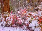 a fall winter wonderland was so very beautiful. October 31, 2014