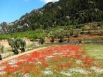 Spring in Miravet