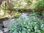 Native Landscaping invites you to relax in the forest-like garden