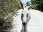Give the right-of-way to neighborhood donkeys