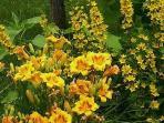Enjoy our extensive perennial & herb gardens