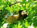 Sloths We know how reach until their natural habitat at rainforest