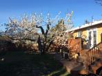 Pear Suite back yard view of property with cherry tree in bloom