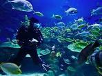 Submarinismo Islas Medas
