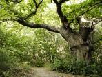 forêt à deux pas de chez nous