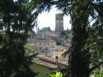Anghiari viewed through the trees