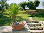 Plants in the garden - Villa Russelia in Rhodes
