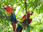 Meet Leonardo, our Resident Scarlet Macaw.