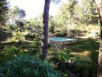 Garden / pool area