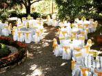 a wedding on under the mango tree