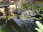fish pond with waterfall and water lilies in the garden