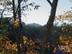 Views from Deerly Beloved