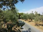 GATE AND OLIVES