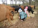 Ask about doing a farm tour with Patti. Feed the herd - try hand feeding these friendly big beasts.
