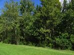 Back garden with trees in summer