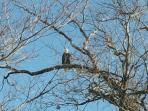 Enjoy Eagle watching all year!
