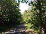 Drive to the apartment through the Rocca Roamana Forest (part of the Bracciano Park)