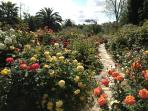 the flagstone path to the tennis court is lined with 300 roses