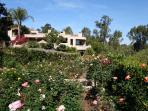 our roses bloom most of the year, and fill the casita with fragrant flowers