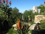 Indiginous garden with rock pool