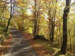 Autumn in Vico