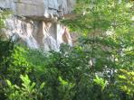 Cliff face of the Niagara Escarpment behind the house