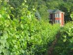 The Estate House in a sea of Vines