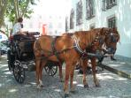 Carriage rides to see the sites