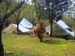 camping and paragliding in Bir Billling, Himachal Pradesh.