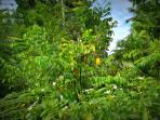 The Exotic Plantation