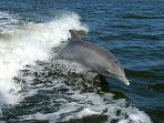 Go dolphin and whale watching in Kalpitiya